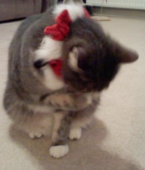 Eric ashamed to get into the holiday spirit